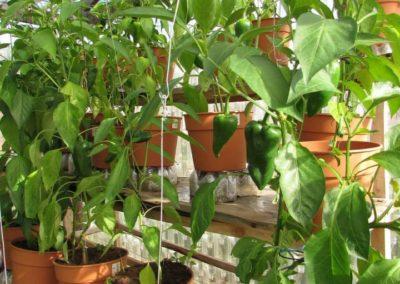 Nuestras plantas en macetas.